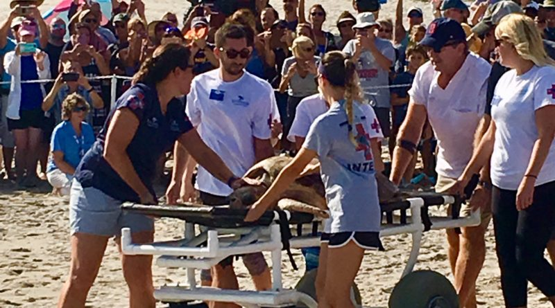Turtle Release - Loggerhead Marinelife Center in Juno Beach, Florida